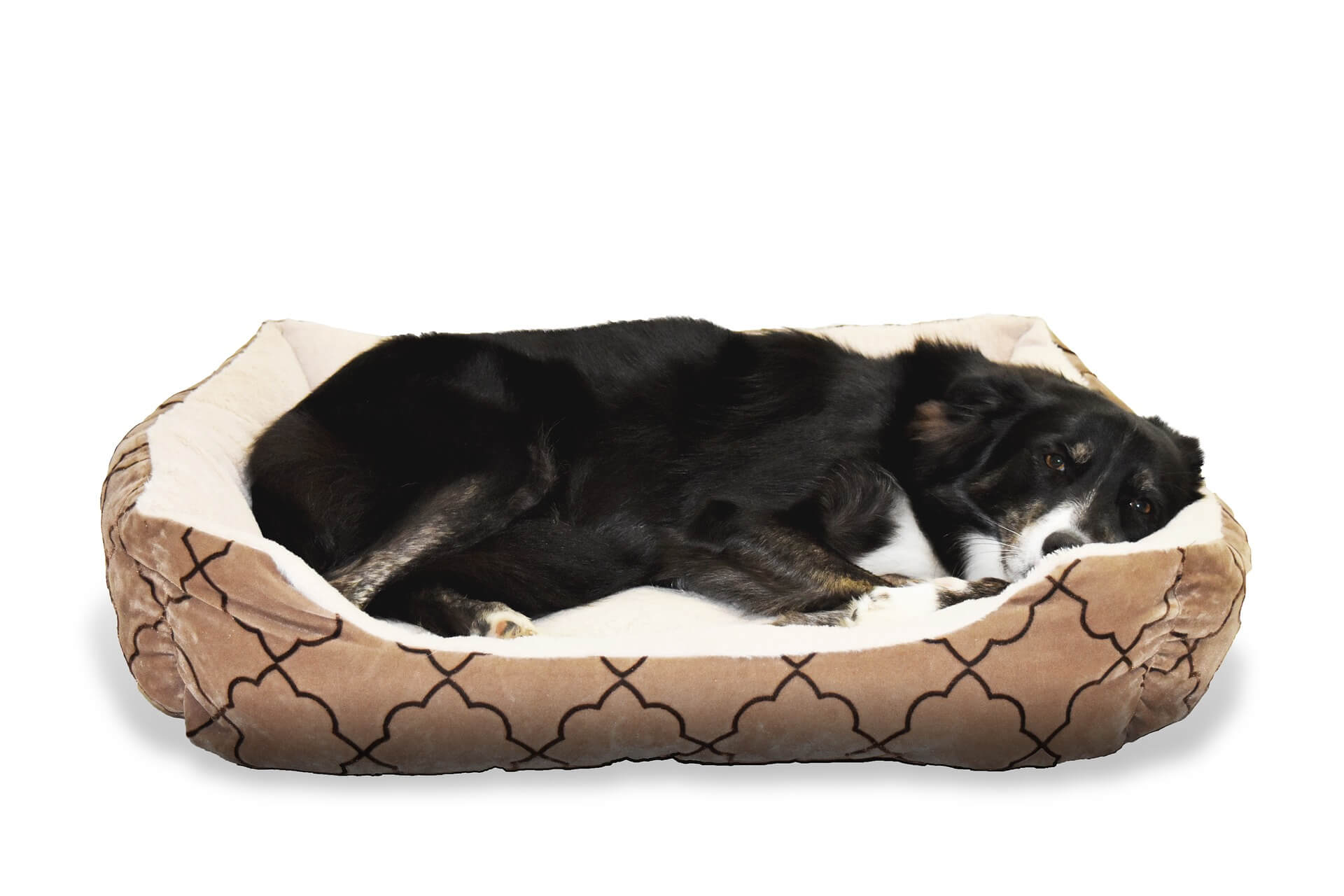 Victor Dog Food Reviews >> Best Heated Dog Beds in 2019 – Guide & Reviews